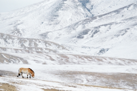 Nicolas-Digard-travel-Photographer-Mongolia-11