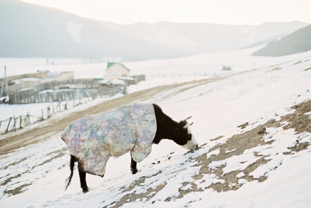 Nicolas-Digard-travel-Photographer-Mongolia-3